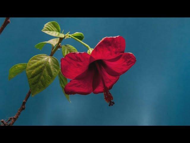 Rolf Lovland ~ Song from a Secret Garden ~ Secret Garden
