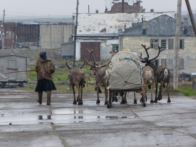 Не самая редкая картина на улицах Амдермы