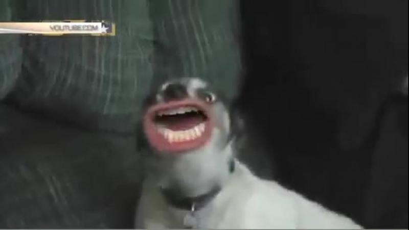 Безумный монтаж_ собаки с человеческими ртами