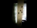 мухи канфеты