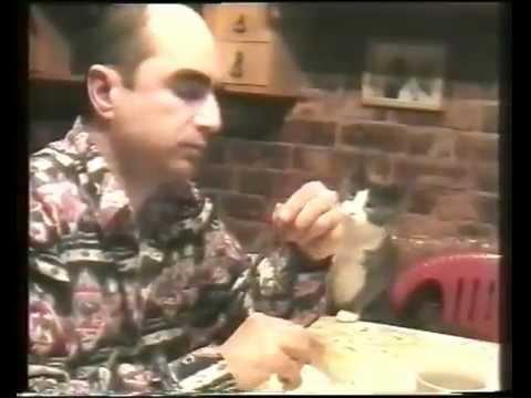 Gato pede comida com linguagem gestual
