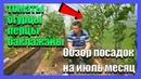 Обзор посадок в теплице на июль месяц 08 07 2018 огурцы перцы томаты баклажаны Дом в деревне