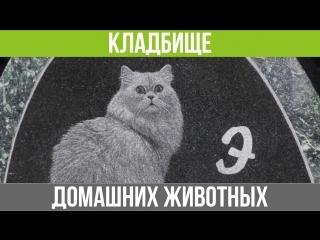 Кладбище домашних животных Екатеринбург