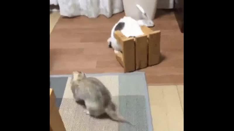 Хозяииин Это какая то бл@ть большущая мышь
