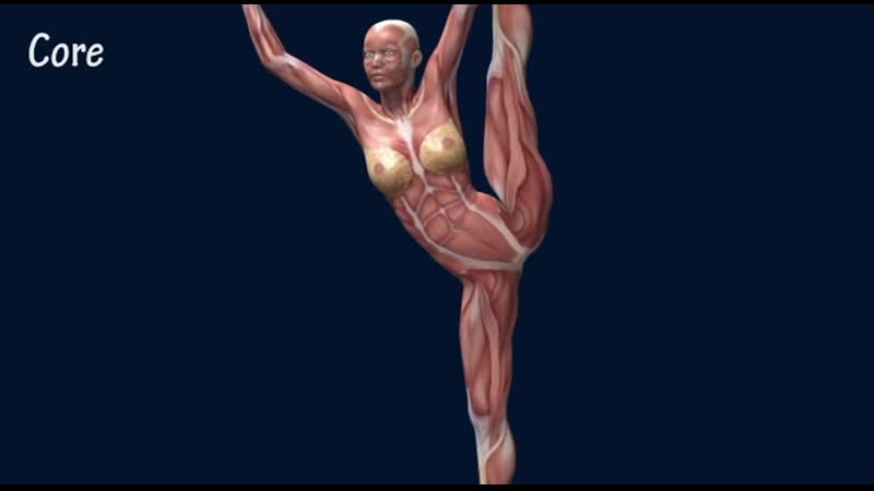 SLs How to Developpe Muscle Anatomy Training Program EasyFlexiiblity