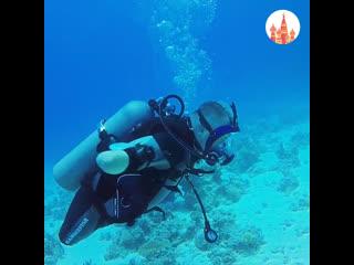 Дайвер без рук и ног покорил самый глубокий в мире бассейн
