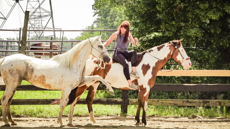 Тренинг лошадей основанный а свободе | Синергия с Лошадьми | Полгода на новой конюшне