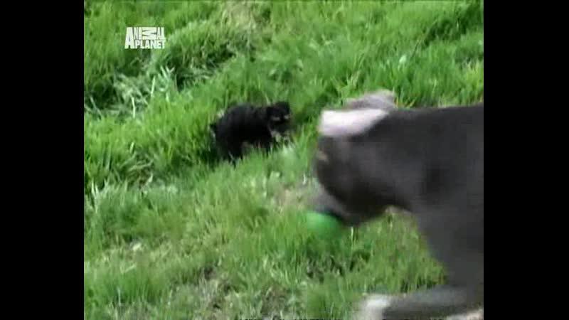 как воспитать щенка переводчик с собачьего