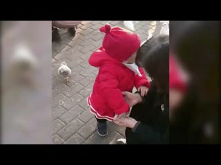 []Маленькая девочка отбирает корм у наглого голубя.mp4