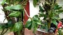 15 loại phong lan phổ biến được săn lùng và trồng nhiều nhất hiện nay
