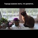 Фотоальбом Тошы Доигралися