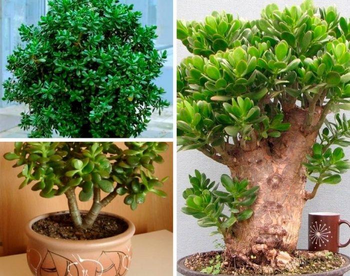 Растения, которые приносят удачу в дом и офис в 2020 году