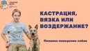 Половое поведение собак. Кастрация, вязка или воздержание