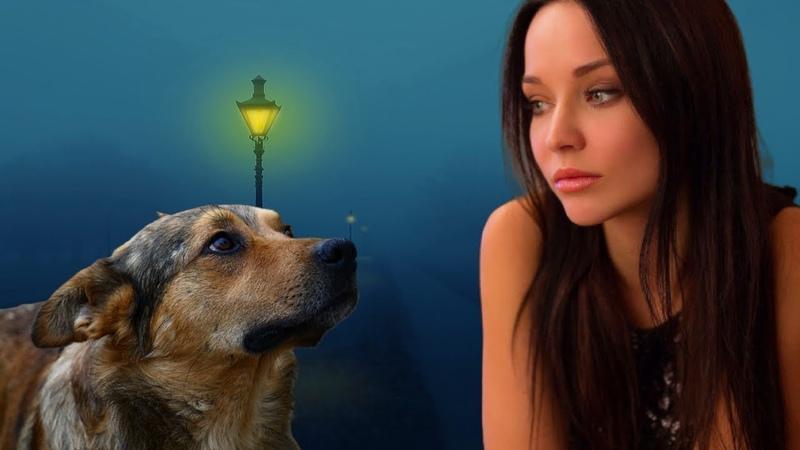 Бездомный пёс оторопел когда к нему подошла дама в роскошной одежде и заговорила