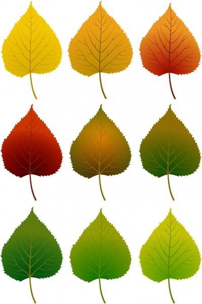 место картинки листы разного цвета кеа практически всем