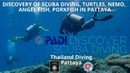 Discovery of scuba diving, turtles, nemo, angel fish, porkfish in Pattaya with thailand diving club