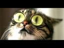 ТОП ПРИКОЛЫ С ЖИВОТНЫМИ РЖАКА ДО СЛЕЗ СМЕШНЫЕ КОТЫ FUNNY VIDEO BEST COUB