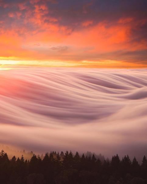 Туманное утро (штат Вашингтон, США)