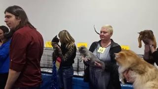 """десятка победителей Fun Show """"Леди"""" .№ 113 Tessa Rysenok 6 место из 15 кошек разных пород."""