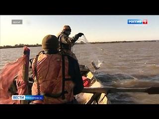 Вылов во время лососёвой путины в Хабаровском крае ожидается одним из самых низких