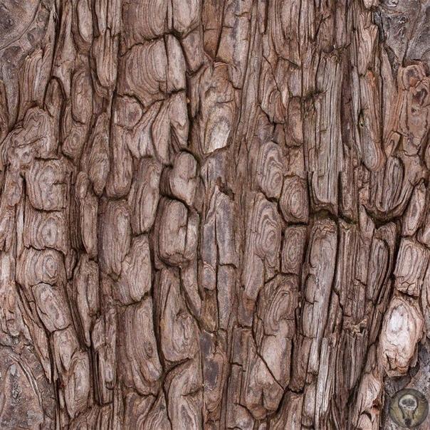 КАК ПОЯВИЛОСЬ ПЕРВОЕ ДЕРЕВО. Представить себе мир без деревьев очень сложно. Но ведь когда-то их на нашей планете не было. Когда появилось первое дерево Точный ответ на этот вопрос науке пока