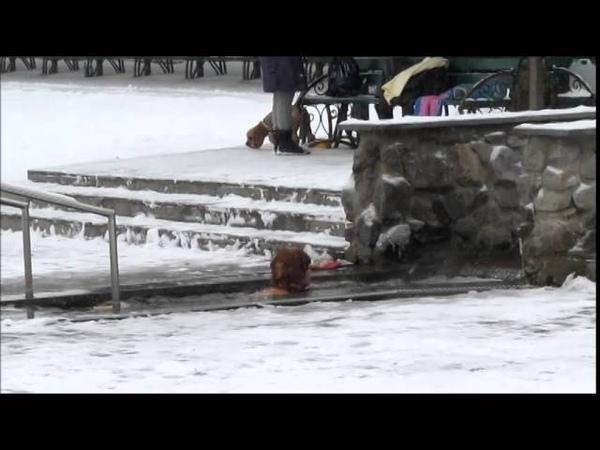 женщины и зимнее закаливание Харьков Women and winter hardening Kharkov