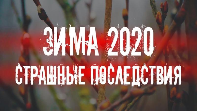 ТЕПЛАЯ ЗИМА 2020 ● Тяжелые последствия для РОССИИ