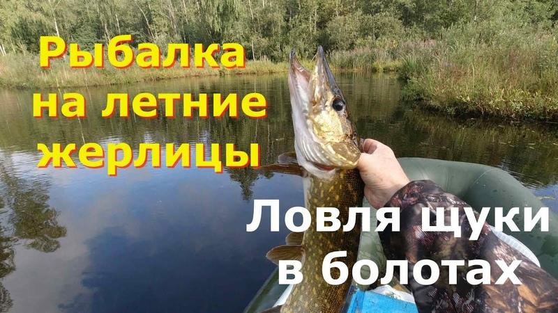 Рыбалка на летние жерлицы Ловля щуки в болотах