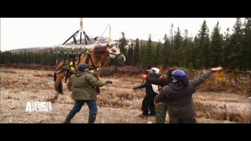 Dr Dee Alaska Vet S2 on Animal Planet HD ch 364