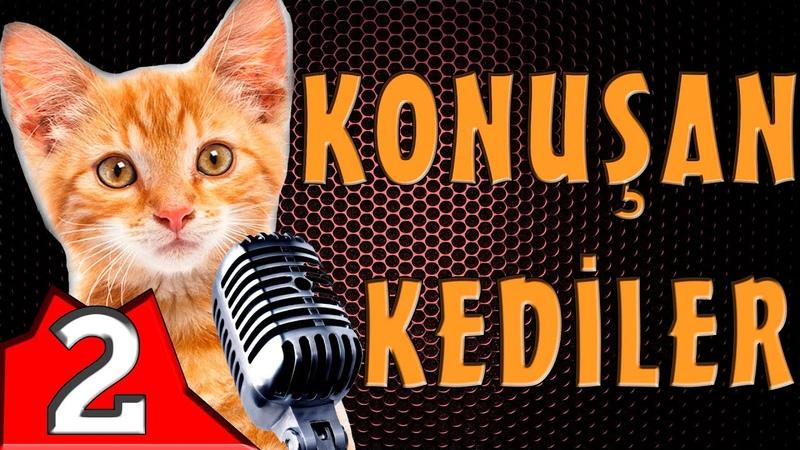 Konuşan Kediler 2 Komik Kedi Videoları En Komik Videolar 2