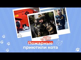 В новосибирской пожарной части живёт кот Гидрант