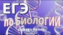 Написать ЕГЭ по биологии на 100 баллов. Синтез белка. 3' - 5' формат 2020г. Тип 2