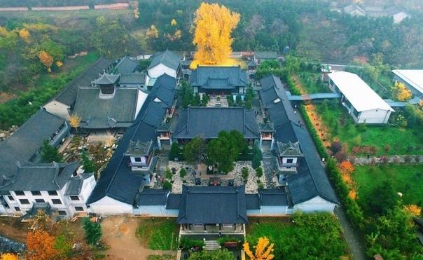 В Китае опадают листья с 1400-летнего дерева гинкго. С приходом осени тысячи людей со всего Китая устремились в город Сиань, где опадают листья с 1400-летнего дерева гинкго. Каждый год зеленые