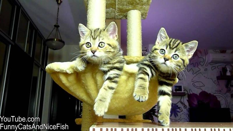 Funny Cats watching Women s tennis Too Cute Kittens