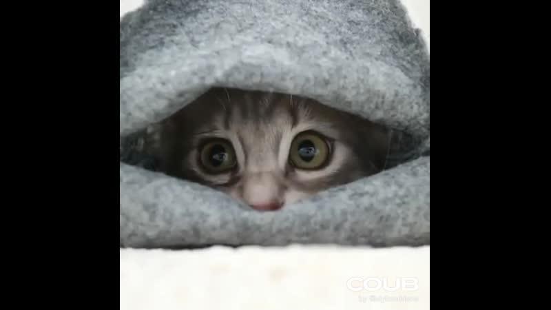 Cute lazy kittens = ^.^ =