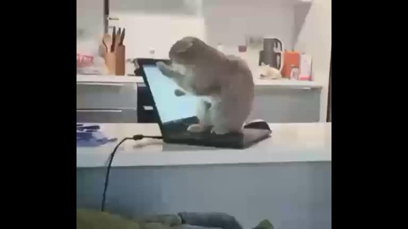 Кошки (Temno..)