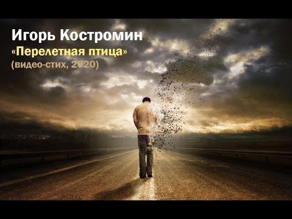 Игорь Костромин Перелетная птица видео стих 2020