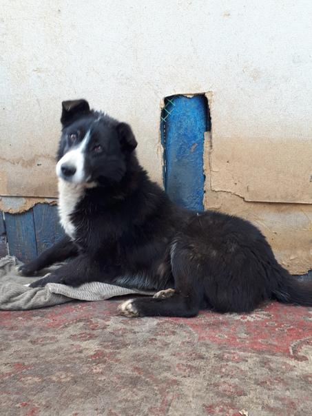 пропавшие собаки фото