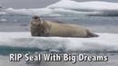 Оззи Мэн комментирует Тюлень с большими мечтами Озвучка Rumble