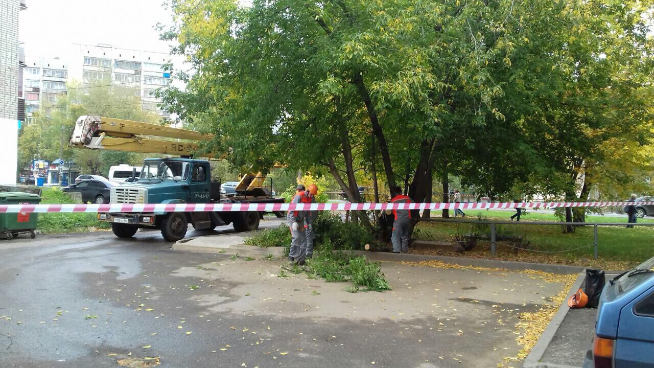 Улица Лепсе дом 38 спиливание аварийных деревьев