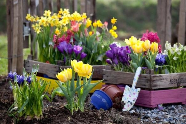 ПОСАДКА ЛУКОВИЧНЫХ ЦВЕТОВ НЕОБЫЧНЫМ СПОСОБОМ Метод лазаньи, или сэндвич, так называют ярусный принцип посадки луковичных цветов. Осуществить такую задумку несложно, достаточно высадить луковицы