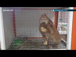 В Устьянах бросили животных в контактном зоопарке