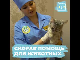 Скорая помощь для домашних животных