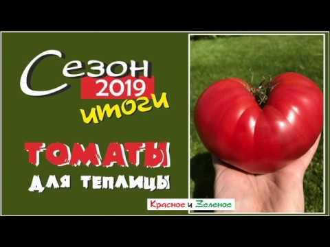 Томаты для теплицы. Самые вкусные и урожайные сорта. Сибирь. Итог сезона 2109