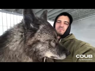 Миленький волчонок