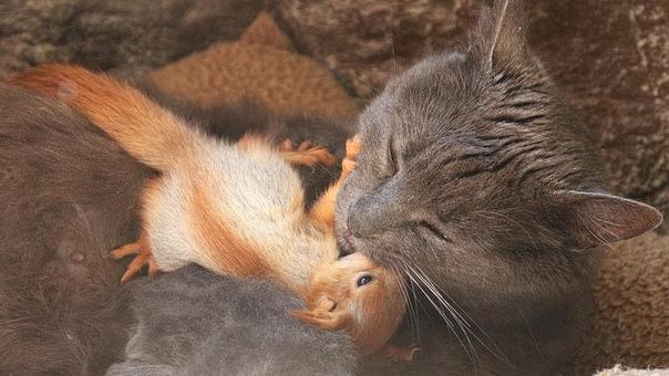 В Крыму кошка Пуша стала мамой для 4 бельчат.