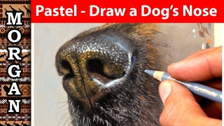 Pastel pencils how to draw a dogs nose