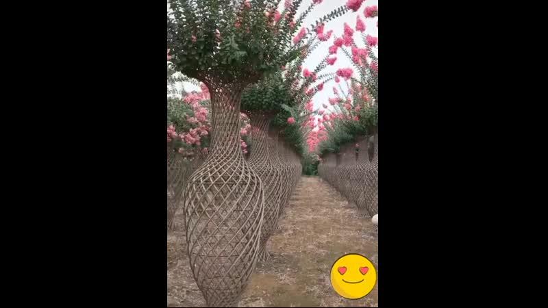 Креативный фермер Бансай