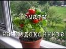 Как вырастить ПОМИДОРЫ в горшках. Ч 1. ТОМАТ ДОМАШНИЙ из семян, пошаговая инструкция