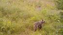 В мире животных уникальные кадры из Гёйгёльского национального парка